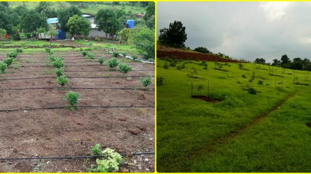 jasmine and Orchard cultivation on hill side area