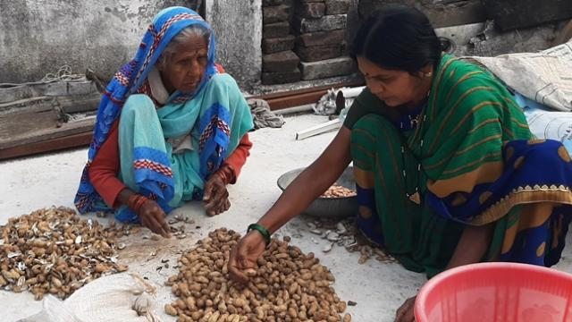 Mechanical production of roasted peanuts by Prafulla Phale