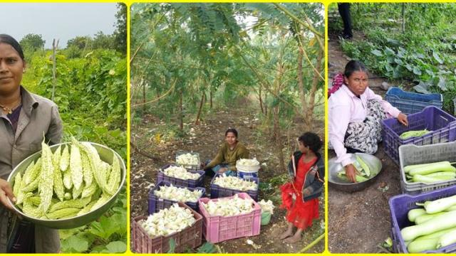Vegetable marketing by Yuva Mauli farmers group