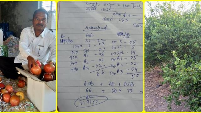 Shivaji Bhanvase family makes Pomegranate, lemon profitable