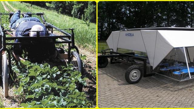Thinning & weed control Lay down method
