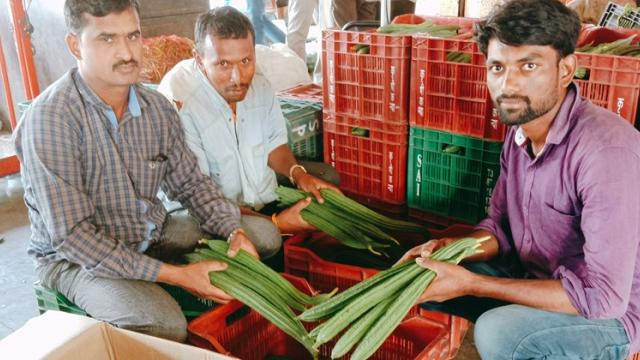 ridge guard market updates of agriculture produce market committee pune