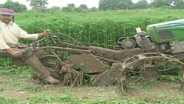 Green manure is applied with the help of power tiller during land prepartion