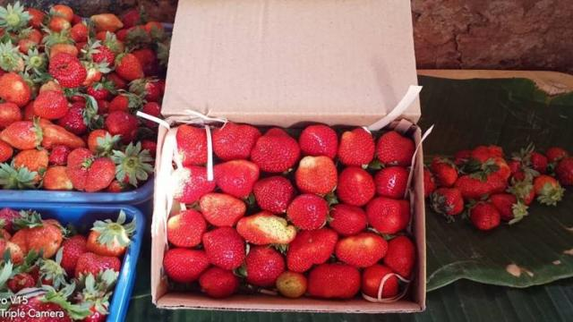 Production of attractive strawberries