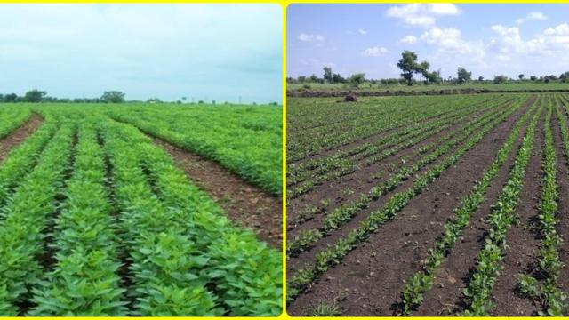 Innovative sowing methods for dry land soybeans