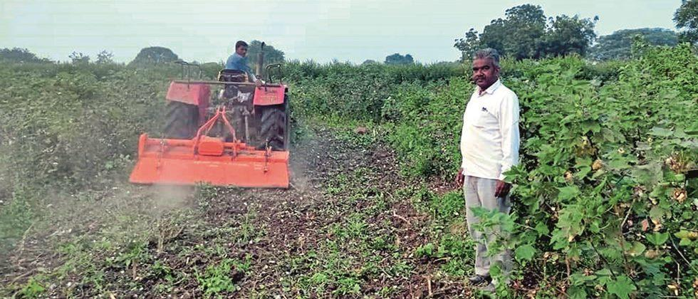 Rabi sowing in 25% of the area in Akola