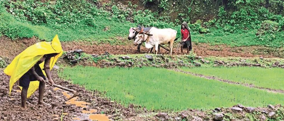 Kharif sowing in the state is three per cent