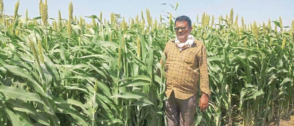 Demand for release of Pentacle water for sorghum crop