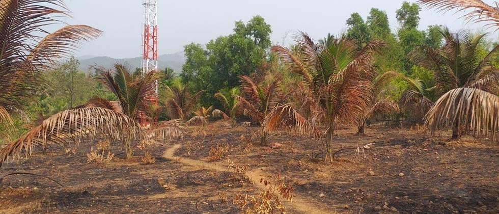 Coconut orchard fire at Nerur