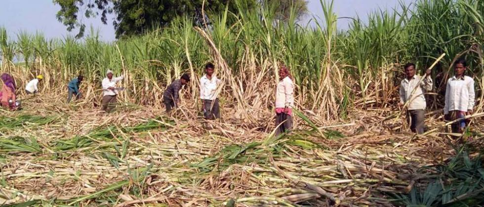 order to give essential facilities to sugarcane cutting workers