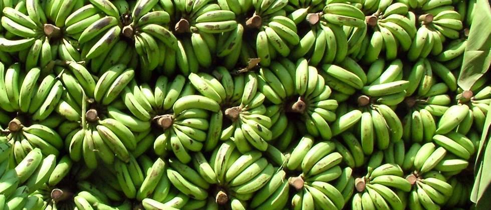Farmers in trouble due to fall in banana prices