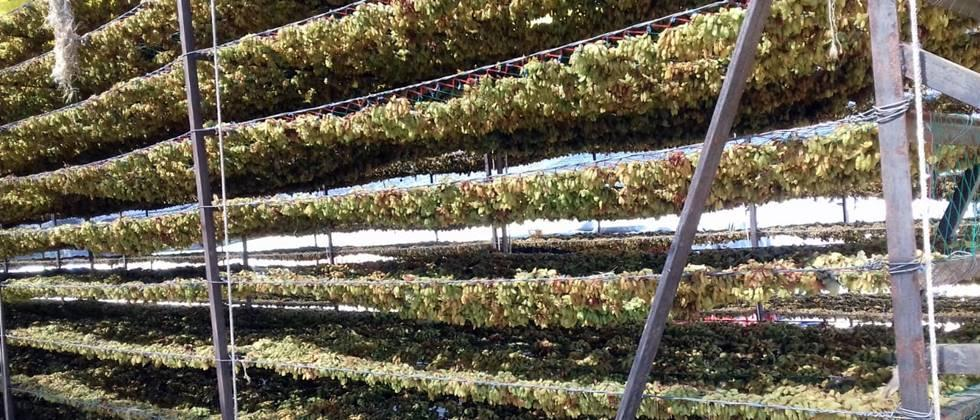 farmers choose option to raisin production
