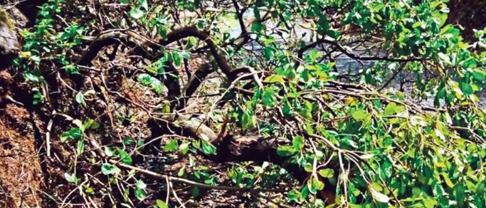 three villages hits due to cyclone