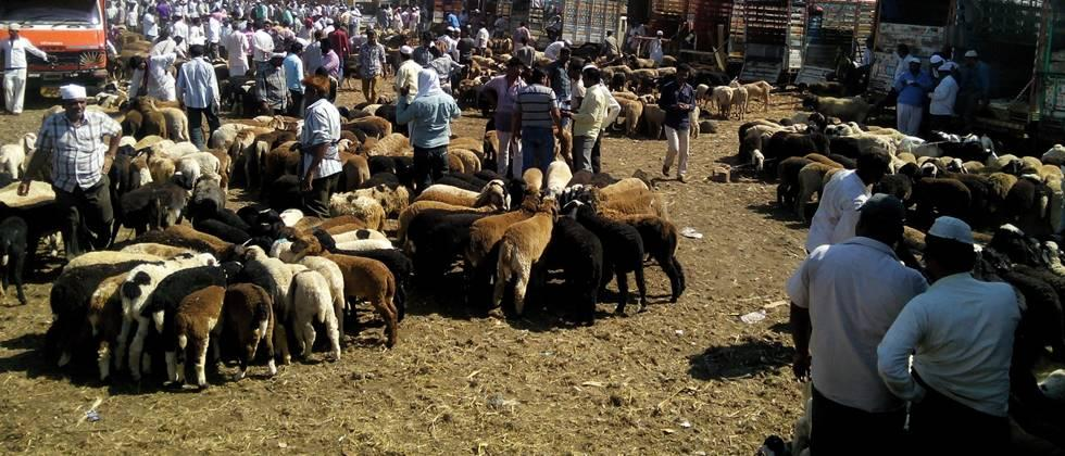 Demand to start goat and sheep market