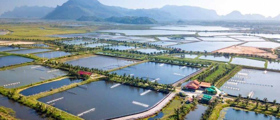 Strategy for sustainable aquaculture, the world's fastest growing food sector