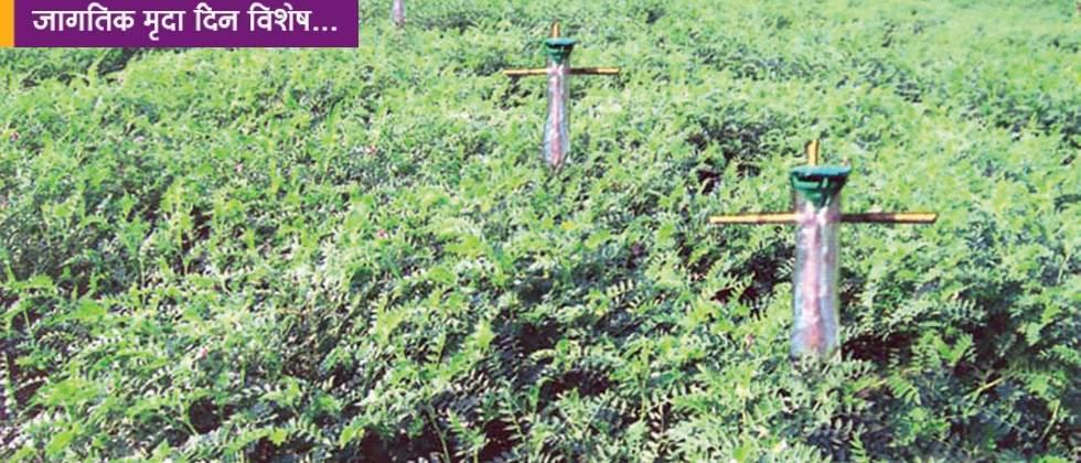 The use of fertile soil and biofertilizers for strengthening the growth of the crop.