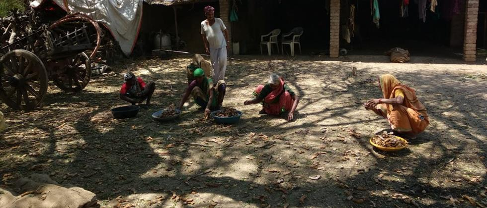 Financial support to farmers without costly chinch crop in Ambad