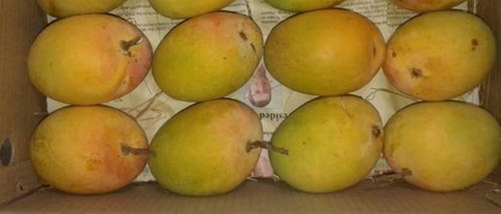 Action if other mangoes are sold as hapus