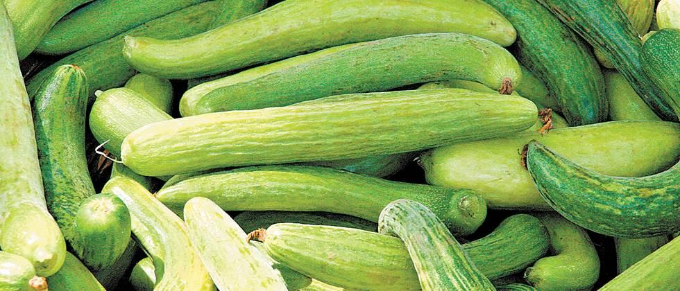Cucumber in Parbhani costs Rs. 600 to 1200 per quintal