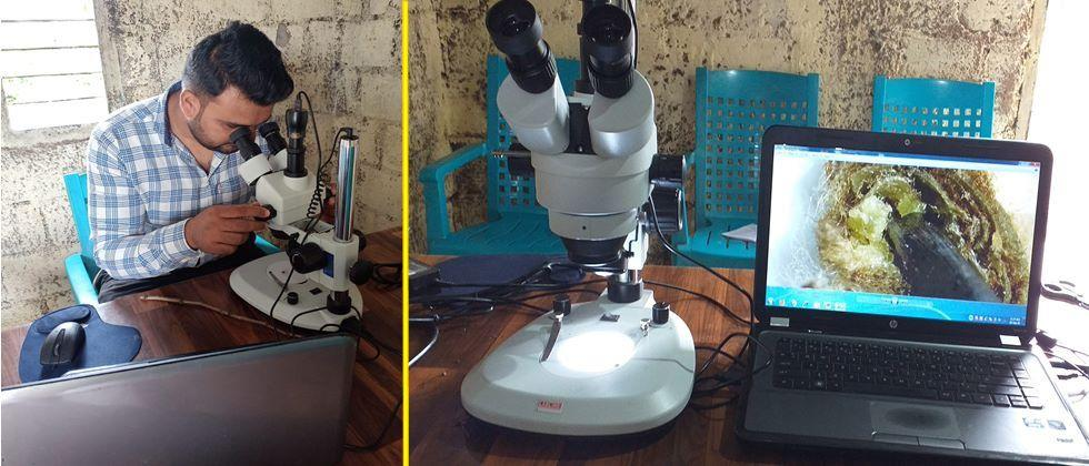 Use of microscope and laptop for eye examination of grape sticks