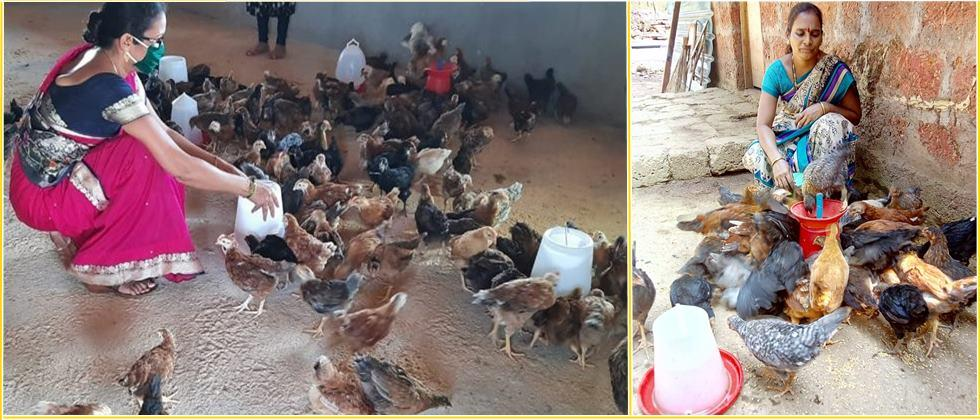 The women in self help group have become skilled in rearing native hens.