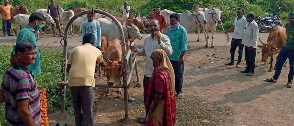 animal vaccination programme in village