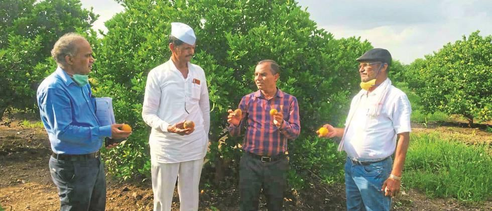 Fruits in citrus orchards due to heavy rains: Dr. Patil