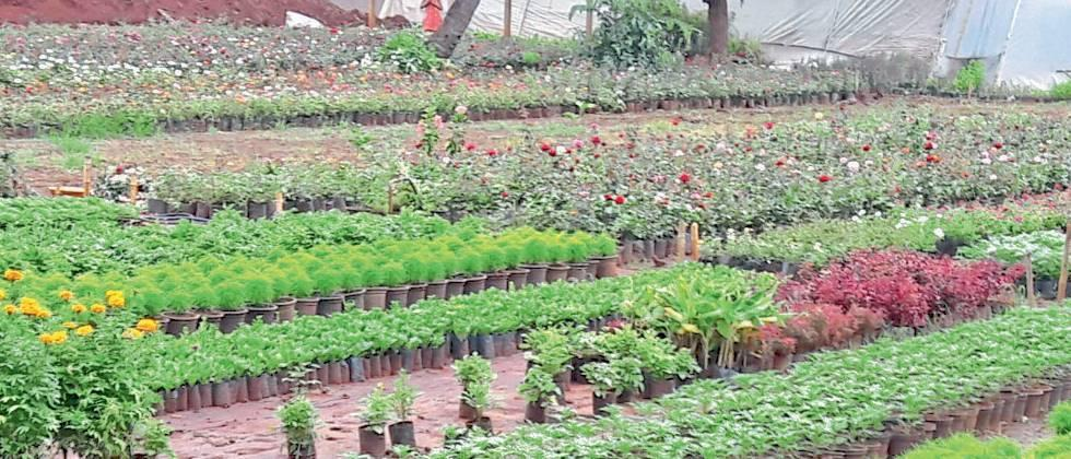 plants and seedlings available for sale in Vanamkrivi's nursery