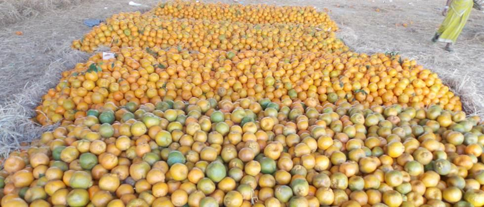 Orange in the state is 500 to 4000 rupees per quintal