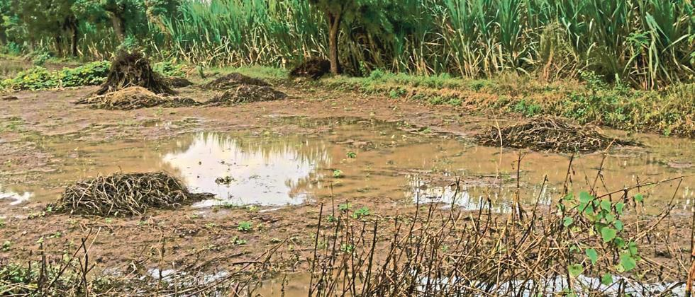 Five and a half thousand hectares of crops hit in Satara district