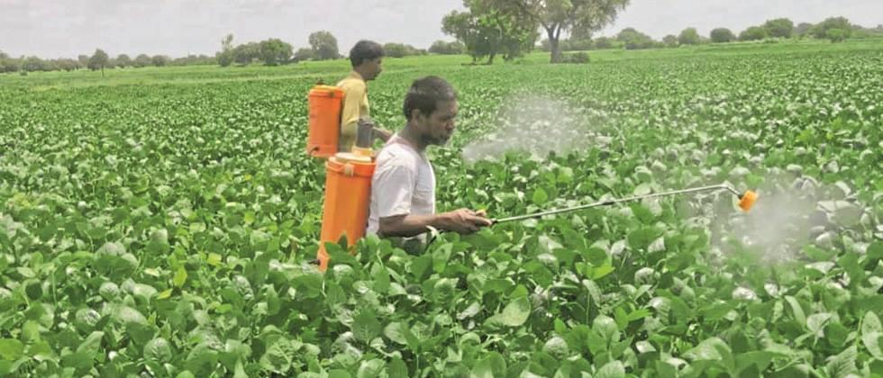Rains hit soybeans in Nanded district