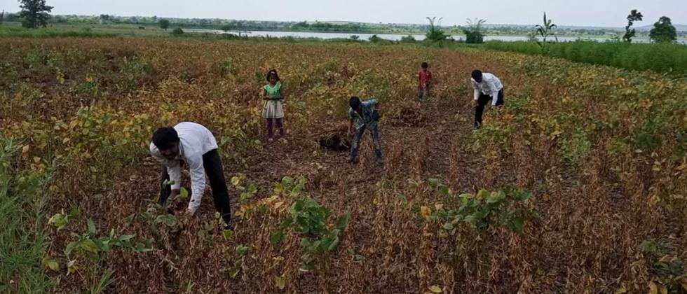 Damage to two lakh hectares of crops in Parbhani district
