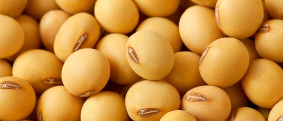 Soybean prices reached six thousand
