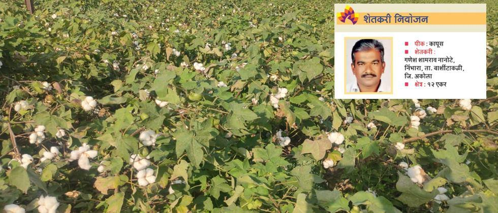Farmers planning, crop cotton