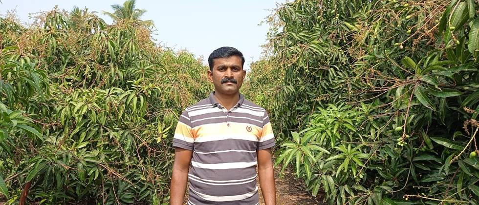 Santosh More in his saffron mango orchard.
