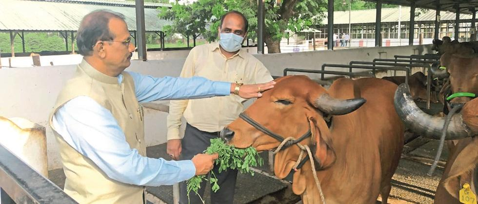 Sakartey Indigenous Cow Research and Training Center in Pune