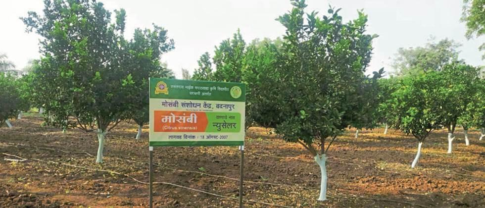 About 200 farmers are ready for orange export