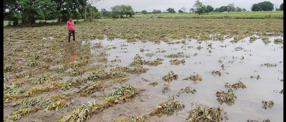 heavy rain damaged crop producer take 450 crore distribute