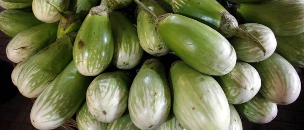 brinjal of bharit Rs 1800 to 3500 per quintal in Jalgaon