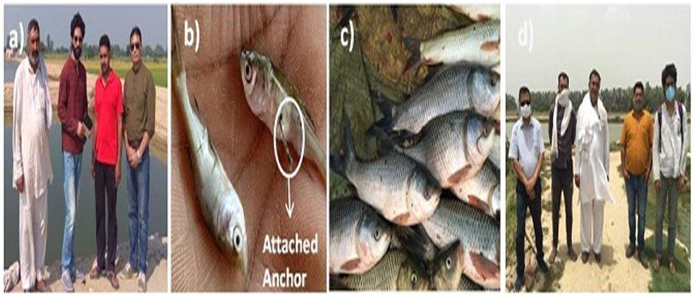 Hand Holding Approach in fish rearing under MGMG Programme in Haryana