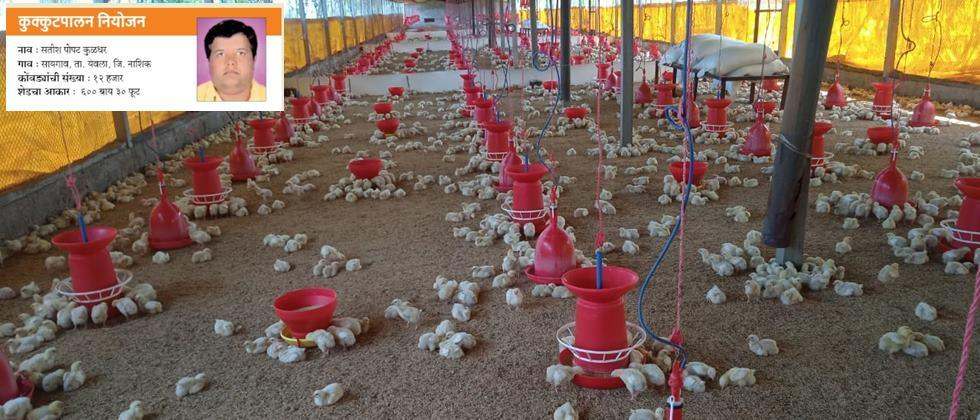 Poultry planning