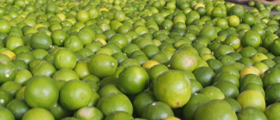 Lemons in the state cost Rs. 200 to 1600 per quintal