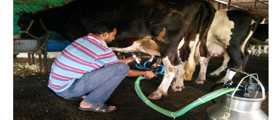 clean milk production is necessary in dairy