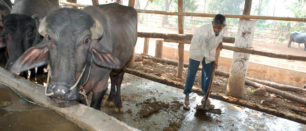 Take care of cattle health