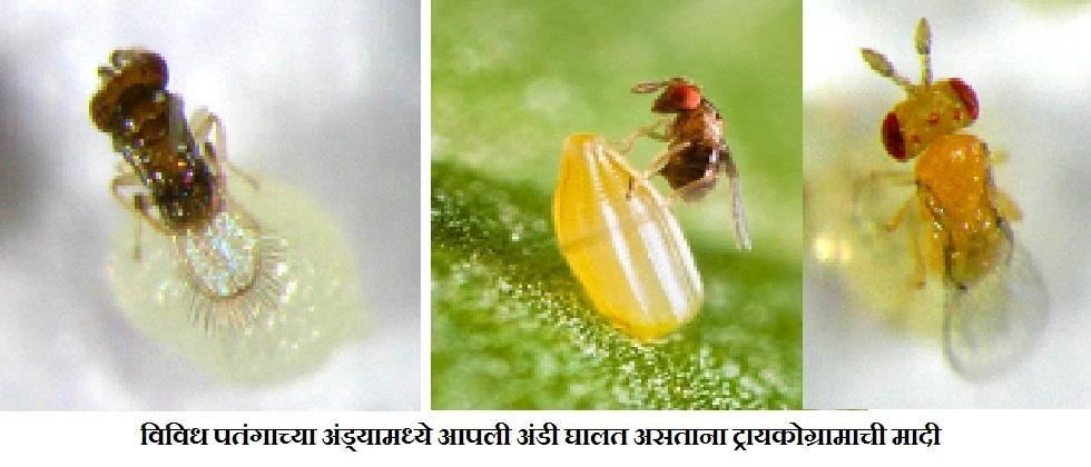 Biological control of different pests