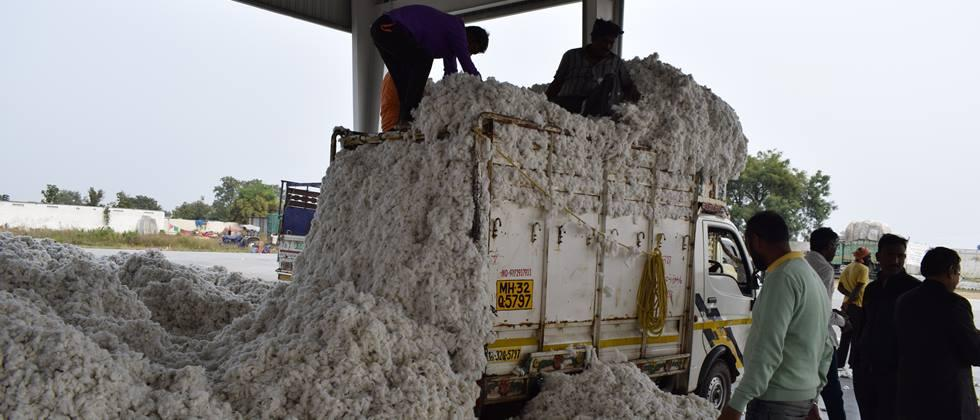 Cotton is being taken down in private ginning after purchase