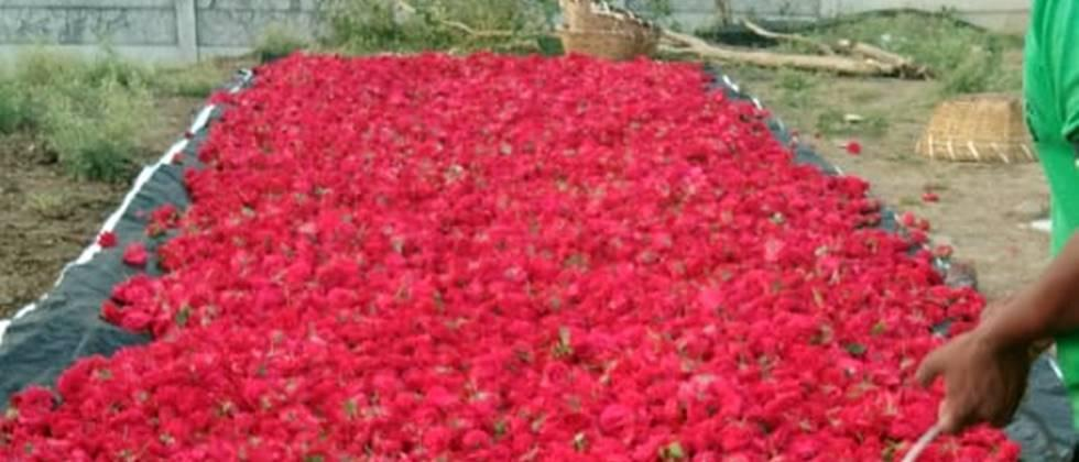 flower producers become in trouble due to corona issue