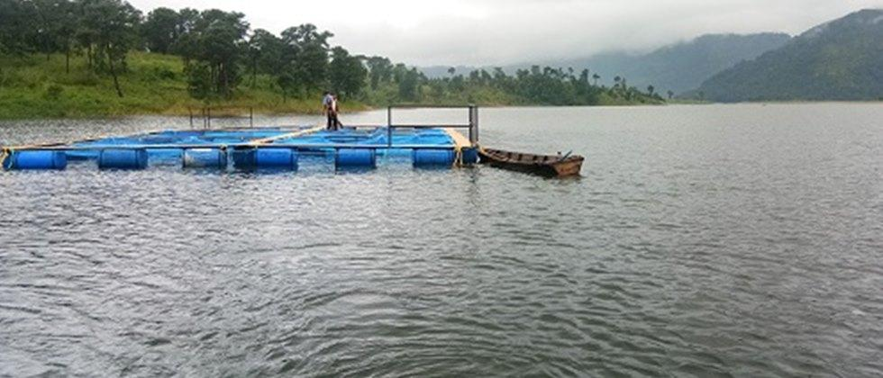 Farmers in Meghalaya started cage structured  fishing