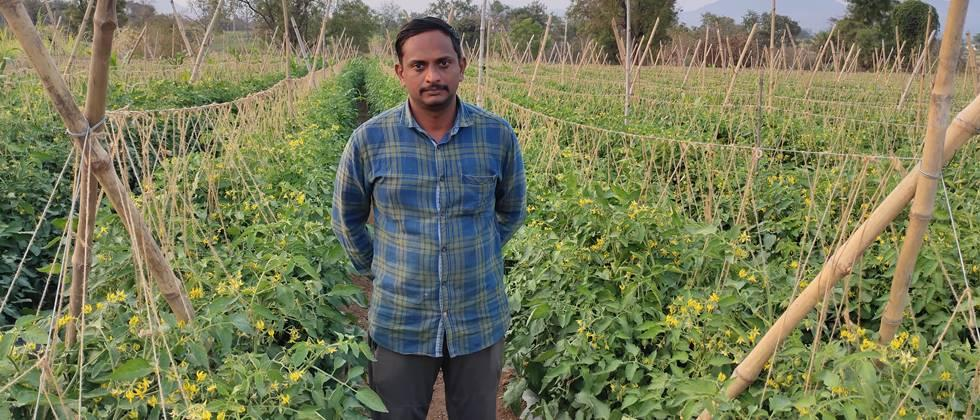 Vikram Salunkhe with his tomato crop