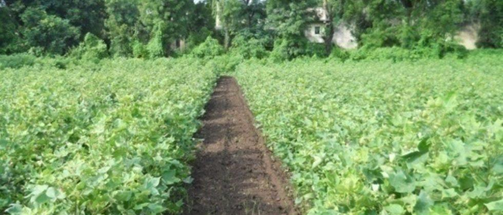 Weed control measures should be implemented early in the crop.